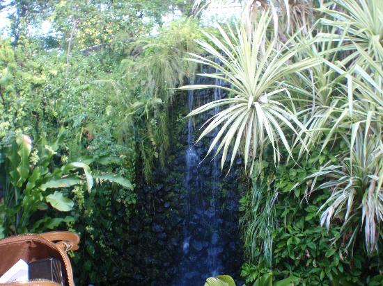 Fort Young Hotel : a beautiful waterfall on grounds