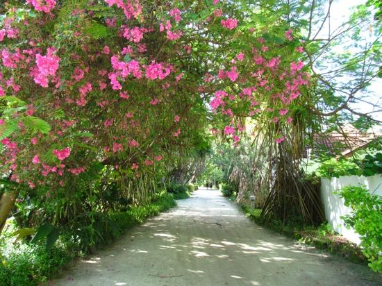 Bandos Maldives: flora and fauna....
