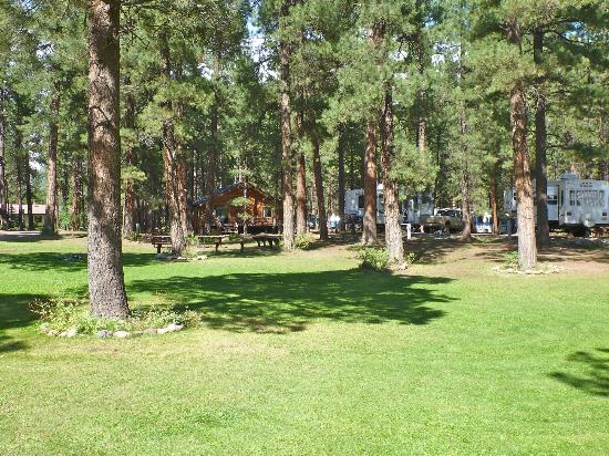 Sportsman's Campground and Mountain Cabins : Nestled in 10 acres of old growth Ponderosa pine trees!