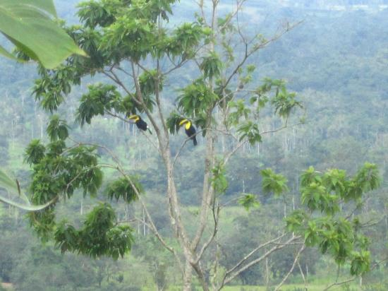 Los Lagos Hotel Spa & Resort: we spied toucans from our balcony!