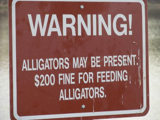 Uchee Creek Army Campground and Marina: Don't feed the alligators