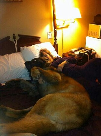 V Hotel and Suites: pet friendly