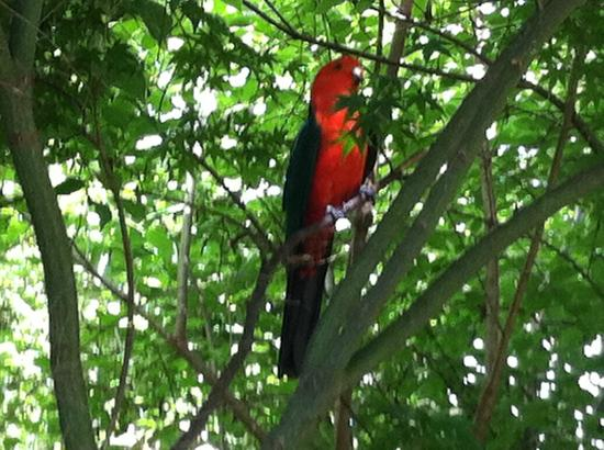 The Birches Luxury Spa Chalets: parrots came to visit