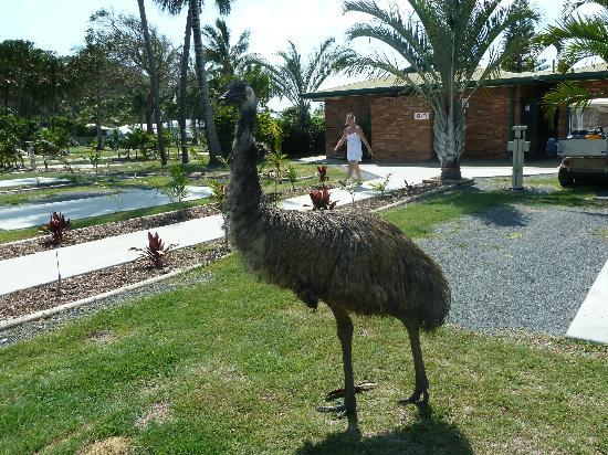 NRMA Capricorn Yeppoon Holiday Park: One of the locals.