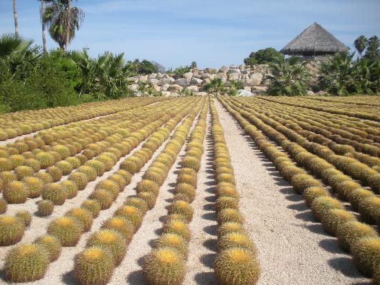 Wirikuta Garden