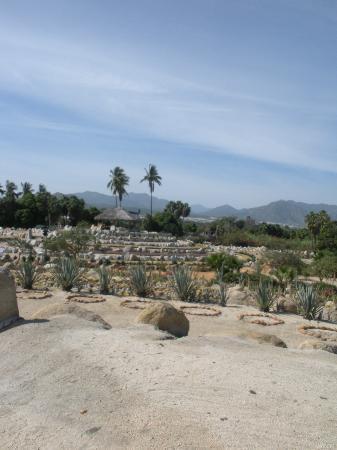 Wirikuta Garden: from the top