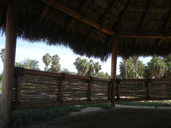 Wirikuta Garden: sweet shade