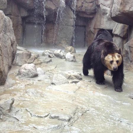 Kobe City Oji Zoo : hokaido bear