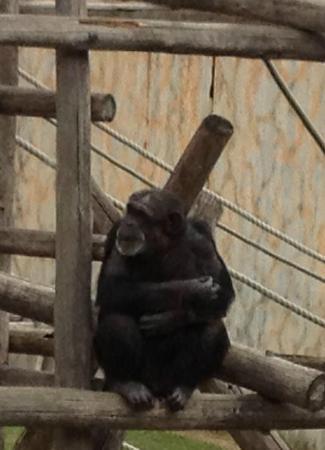 Kobe City Oji Zoo : orangatang