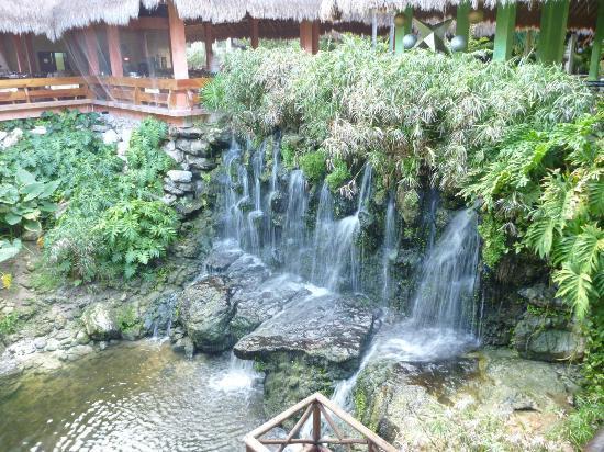 Iberostar Quetzal Playacar: Cascades et bassin des cygnes près du buffet