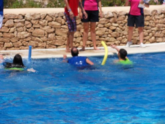 Sirenis Seaview Country Club: pool fun games