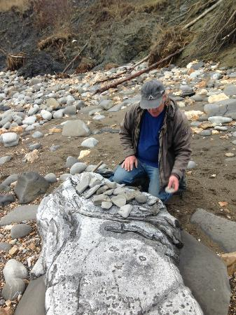 Lyme Regis fossil walks: Finding Fossils in Rocks