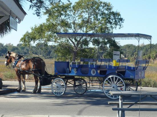 Southurn Rose Buggy Tours: Our Carriage