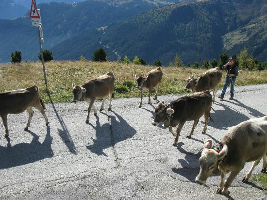 Zillertaler Höhenstraße: Herder with shot of schnapps