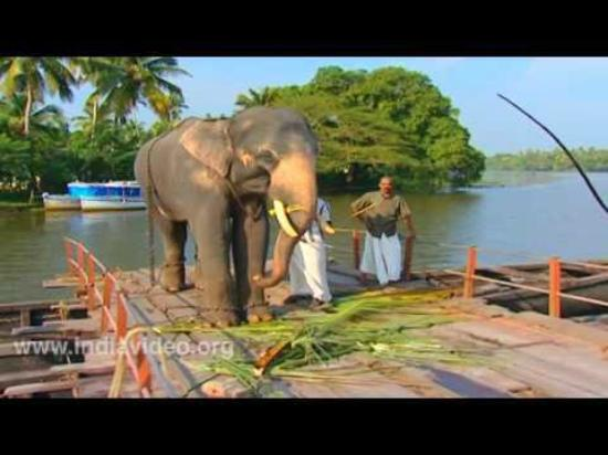 Adenz Backwater Home Stay: Elephant on a Ferry
