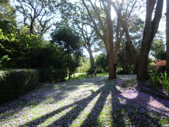 Naro Moru River Lodge: Gardens at sunrise