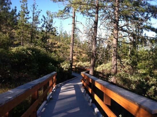 Kalmiopsis Wilderness Area: botanical board walk trail