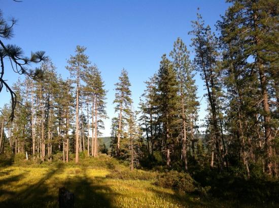 Kalmiopsis Wilderness Area