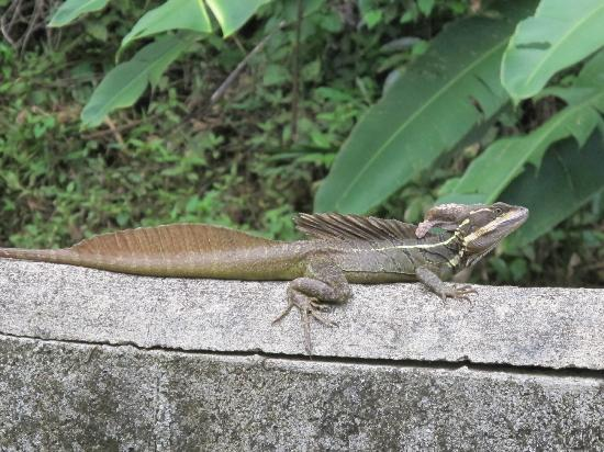 Villas Tranquilas: This fellow greeted us daily at the entrance to the grounds