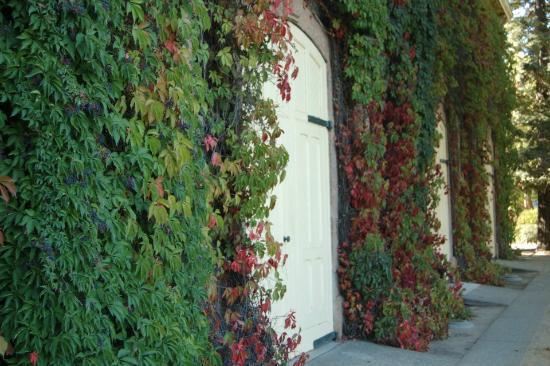 Napa Valley Wine Country Tours: Rubicon Estate