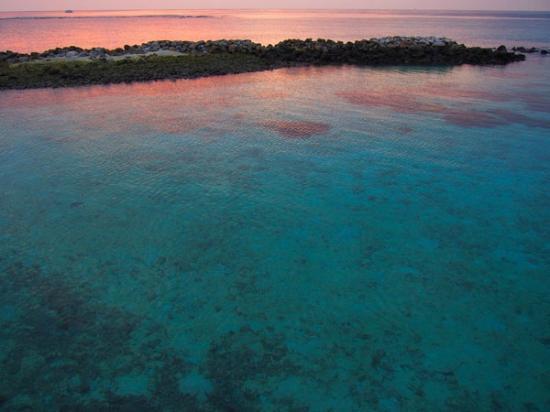 Vivanta by Taj Coral Reef Maldives: 部屋から
