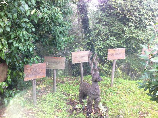ريليه إلكانتيكو ديلا ناتورا: un anglo del giardino immenso 