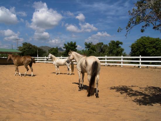 Hacienda Macanao: Caballos Rancho de Macanao
