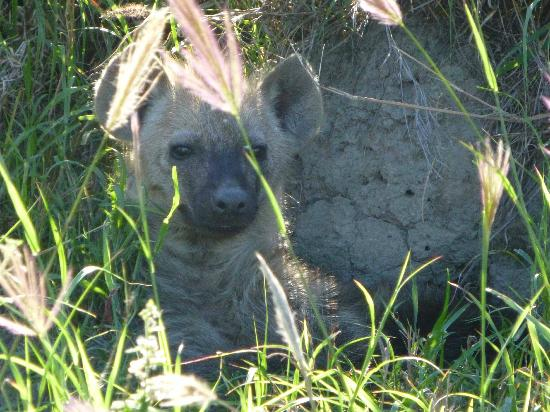 "Elephant Plains Game Lodge: At that age even hyenas get ""look, how sweet"""