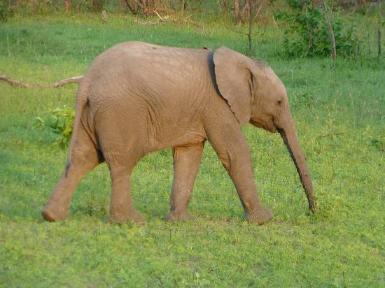 Elephant Plains Game Lodge: A little poser and very funny!
