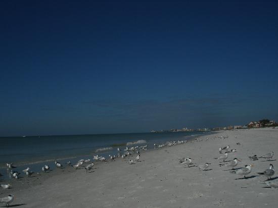 Lands End, Condominium: Sunset Beach, Treasure Island
