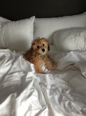 W Austin: she loves the room!