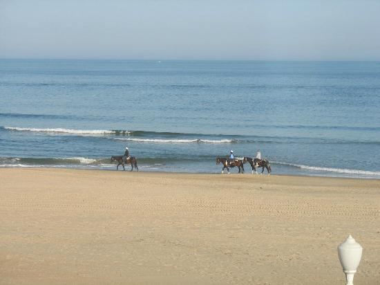 Days Inn by Wyndham Virginia Beach Oceanfront: View of horses on beach taken from the balcony.