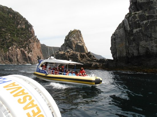 Tasman Island Cruises: Going out in pairs is comforting