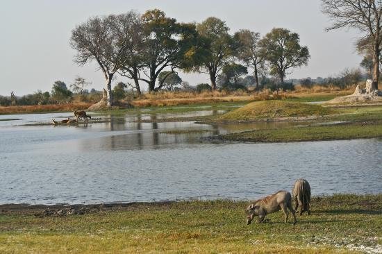 Shinde: receding delta swarming with wildlife
