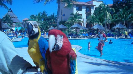 Sandos Playacar Beach Resort: hermosos..