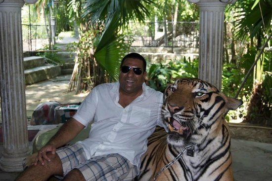 Anda Adventure - Day Tours: With a real Tiger, no walls or a cage.