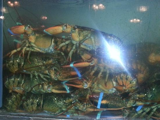 The Lobsterman : Tank full of lobster