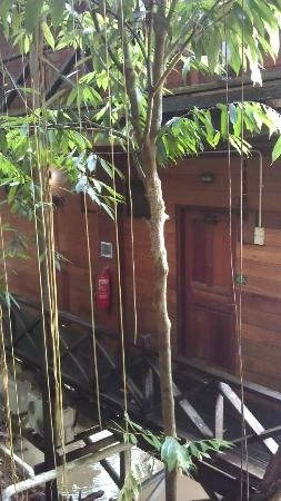 Borneo Tropical Rainforest Resort: View to our room
