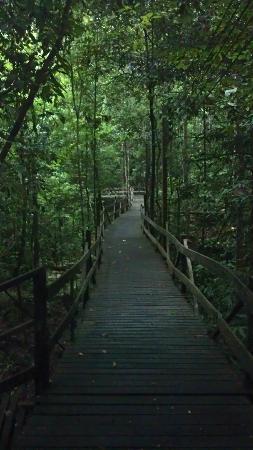 Borneo Tropical Rainforest Resort: Nature walk, beautiful.