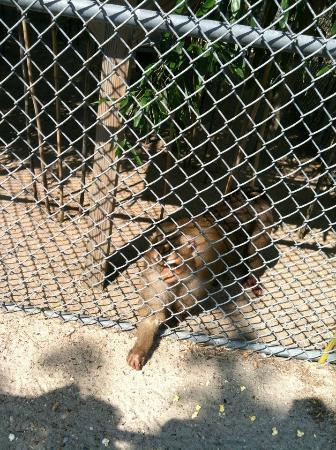 Popcorn Park Zoo: These guys loved popcorn