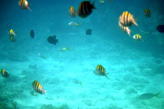 Taino Beach Resort & Clubs : Fish under water during a snorkeling excursion