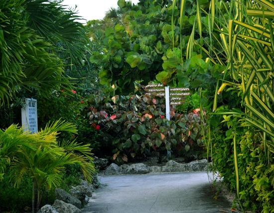 Taino Beach Resort & Clubs: walkway around the pool