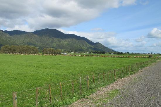Hauraki Rail Trail - Day Rides: Hauraki Rail Trail through farm fields