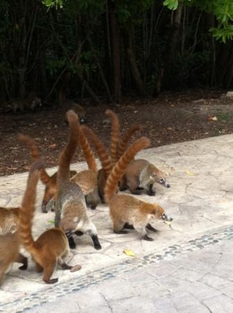 Sandos Caracol Eco Resort: Fauna local 2