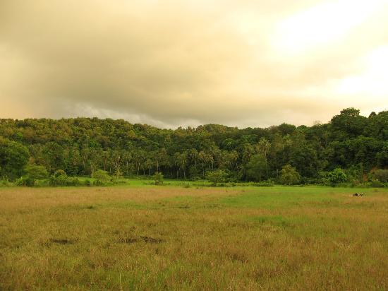 Favehotel Cenang Beach: Вид из номера на джунгли
