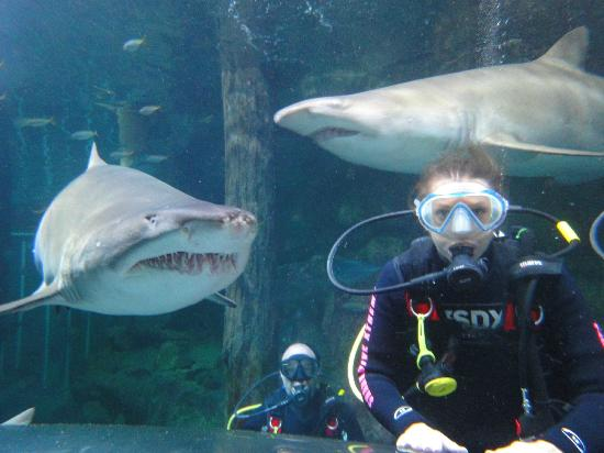 "Manly, Australia: My friend meets ""Patches"" the shark"