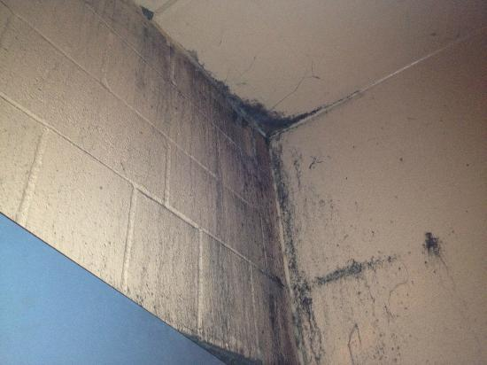 ‪آيل أوف كابري كازينو هوتل ليك تشالرز: Mold in stairwell 1st floor south side