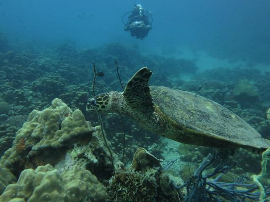 Tropical Diving: Nosy Be Tortue imbrquée