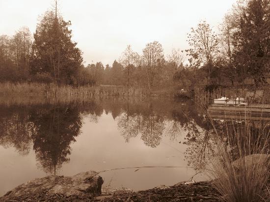 November at Ambraden Pond