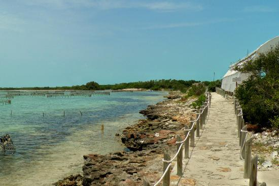 Caicos Conch Farm: off shore pens